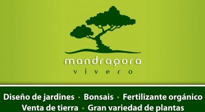 Mandragora vivero en le n guanajuato for Viveros en leon