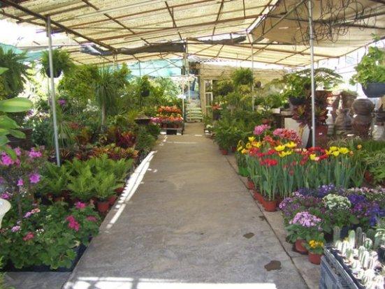 Viveros la palma en le n guanajuato for Jardines residenciales