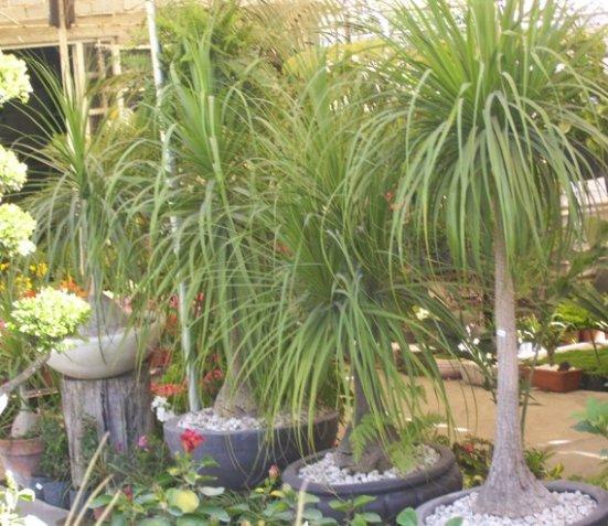 Ideas De Diseño De Jardines Residenciales: Viveros La Palma En León, Guanajuato